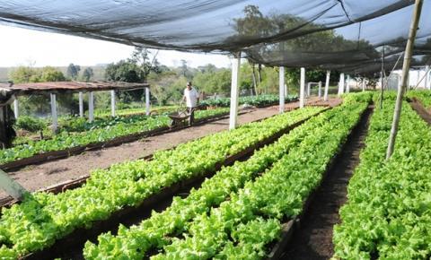 Agroindústria sustentável para a agricultura familiar